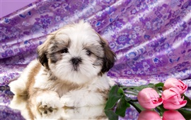 Preview wallpaper Cute puppy, tulip flowers