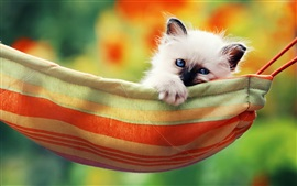 Preview wallpaper Cute white kitty, blue eyes, hammock