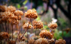 Preview wallpaper Dry flowers, autumn