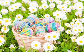 Preview wallpaper Easter, eggs, daisies, white flowers, spring