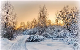 Preview wallpaper Evening, trees, road, sunset, winter, snow