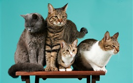 Preview wallpaper Four cats, desk, green background