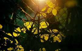 Preview wallpaper Leaves, sun rays, mesh, fence
