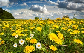 Nature scenery, field, flowers, spring, sky