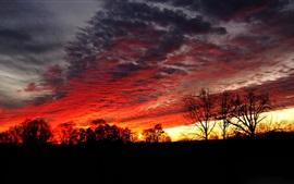 Ночь, деревья, небо, облака, закат, свечение, силуэт