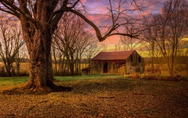 Trees, abandoned house, morning