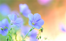 Blue flowers, petals, summer