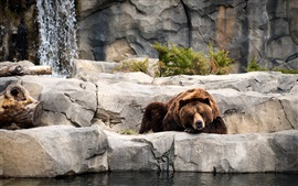 Preview wallpaper Brown bear, sleeping, zoo, rocks