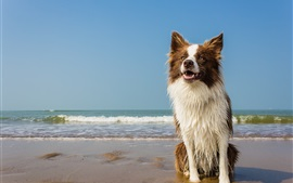 Dog, wet, beach, waves, sea