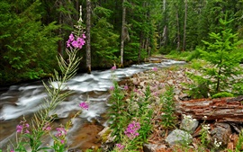 Forest, trees, rocks, stream, flowers