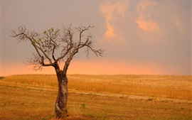 Preview wallpaper Lonely tree, fields, wheat, yellow style