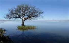 Preview wallpaper Lonely tree, lake, blue