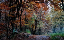 Preview wallpaper Nature forest, autumn, trees, leaves, path