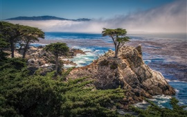 Preview wallpaper Pebble Beach, California, USA, coast, sea, trees