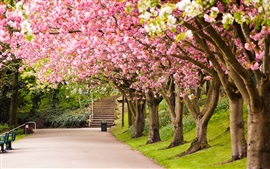 Preview wallpaper Sheffield, England, park, trees, cherry blossom, road, steps, spring