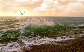Preview wallpaper Sunset, coast, gull, sea waves, clouds