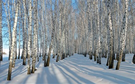 Thick snow, winter, birch trees