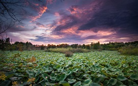 Preview wallpaper Water lily pond, trees, sunset, dusk
