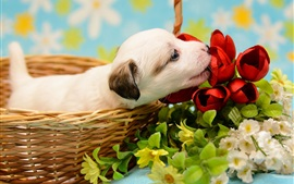 Preview wallpaper White puppy, basket, flowers