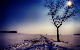 Preview wallpaper Winter, road, snow, trees, sun, dusk