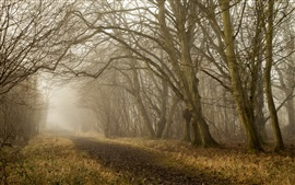 Preview wallpaper Autumn, trees, road, fog