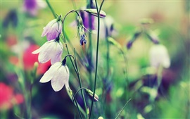 Bells flower, grass, blur