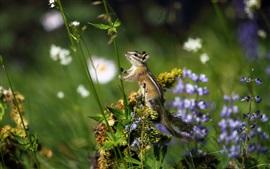 Бурундук, трава, цветы