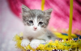 Cute kitten, furry, eyes, gift