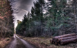 Preview wallpaper Forest, autumn, trees, road, wood