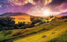 Colinas, árboles, prado, flores, la salida del sol