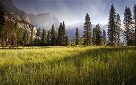 Preview wallpaper Meadow, Yosemite Valley, early morning, trees