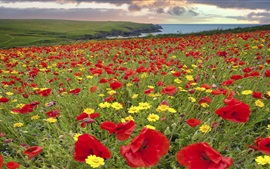 Preview wallpaper Meadow, flowers, poppy, lake, clouds