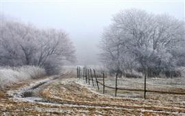 Brouillard Matin, arbres, champ, clôture