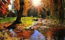 Preview wallpaper Nature landscape, sun rays, trees, leaves, autumn