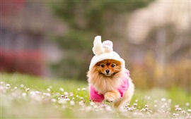 Preview wallpaper Pet, dog, costume, grass, flowers, blurring
