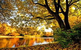 Preview wallpaper River, trees, leaves, yellow, autumn
