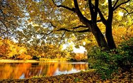 La rivière, les arbres, les feuilles, jaune, automne