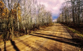 Road, forest, trees, autumn, sunlight, clouds