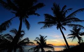 Mar, cielo, nubes, palmeras, silueta