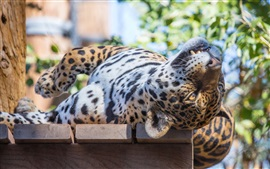 Preview wallpaper Sleep, jaguar, wild cat, predator, face