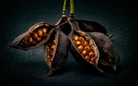 Still life, fruits, seeds, macro photography