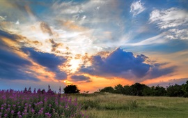 Preview wallpaper Sunset, grass, trees, flowers, clouds