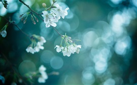 Tree branch, nature, spring, white flowers