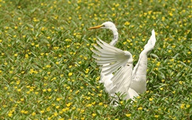 Preview wallpaper White heron, wings, flowers, birds