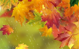 Preview wallpaper Autumn, red leaves, maple, water drops, rain