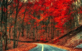 Preview wallpaper Autumn, road, trees, foliage, red leaves