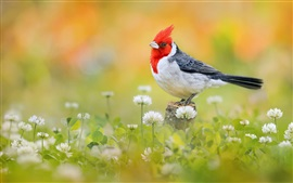 Preview wallpaper Bird close-up, red head feather, flowers