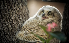 Preview wallpaper Bird, cute owl, tree