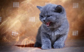 Preview wallpaper British shorthair, kitten, yawn