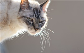 Preview wallpaper Cat, look, bokeh